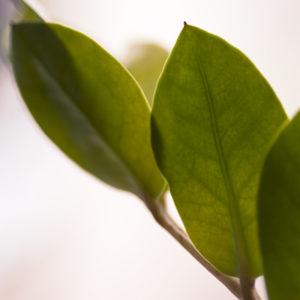 En krukväxt fick bli dagens gulgröna motiv.